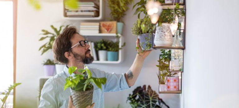 3 plantas para ter em uma casa com pets