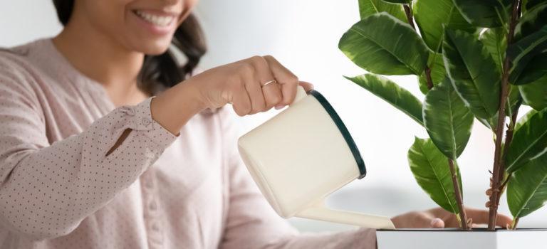 Diário das mães de plantas: como combater pragas?
